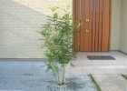 シンボルツリーのシマトネリコ K様邸