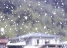舞い散る雪